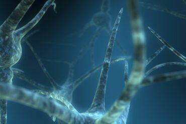 Dual Neuron