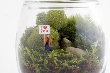 terrarium love
